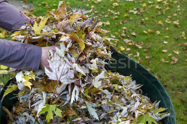 Collecting autumn foliage Stock photo © haraldmuc