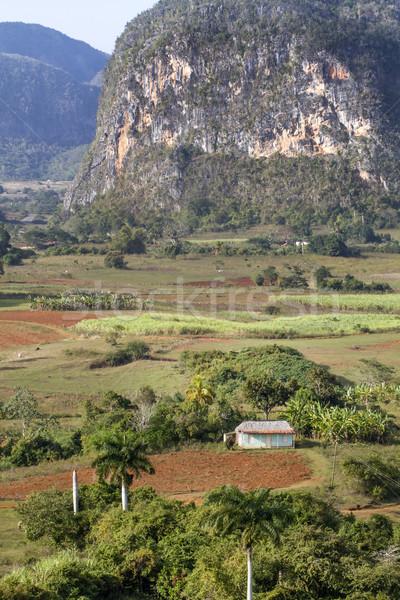 Typisch cubaans landschap zon veld palm Stockfoto © haraldmuc