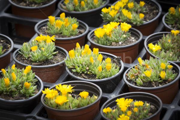 Flores pequeno família natureza jardim fundo Foto stock © haraldmuc