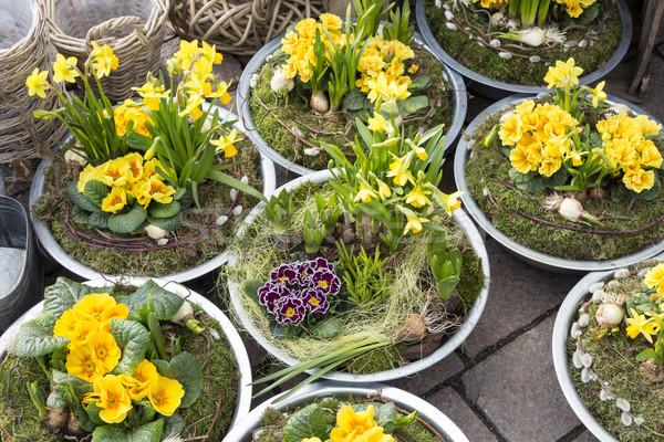Citromsárga kirakat bolt virág kert növények Stock fotó © haraldmuc