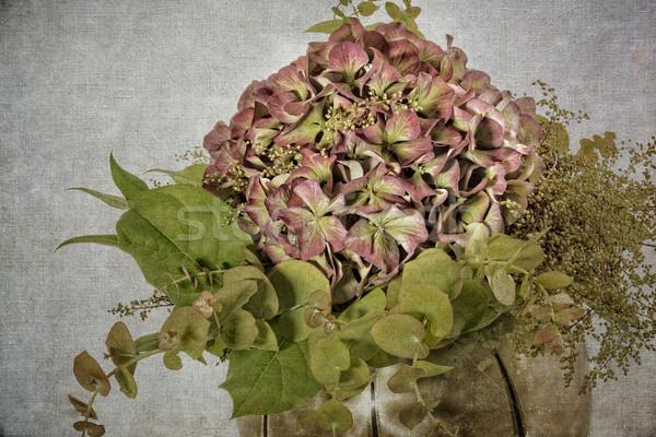 Bloem natuur blad plant Stockfoto © haraldmuc