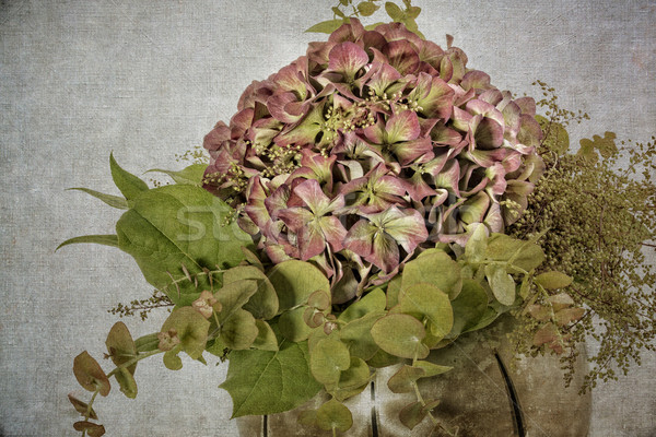 Hydrangea flower in a vase, textured Stock photo © haraldmuc