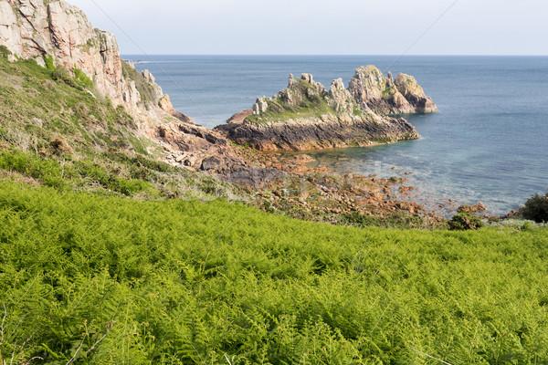 папоротник растущий побережье острове небе путешествия Сток-фото © haraldmuc