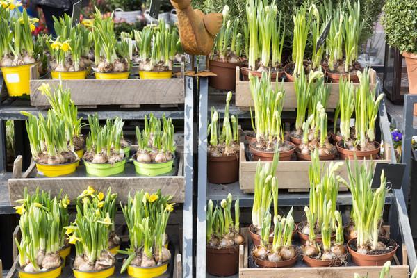 Vers narcissen klein verkoop bloem tuin Stockfoto © haraldmuc