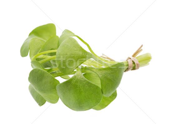 Portulak (Portulaca oleracea) Stock photo © haraldmuc