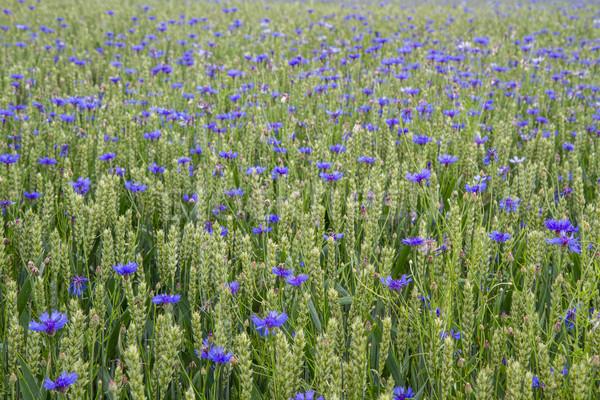 весны продовольствие трава природы Сток-фото © haraldmuc