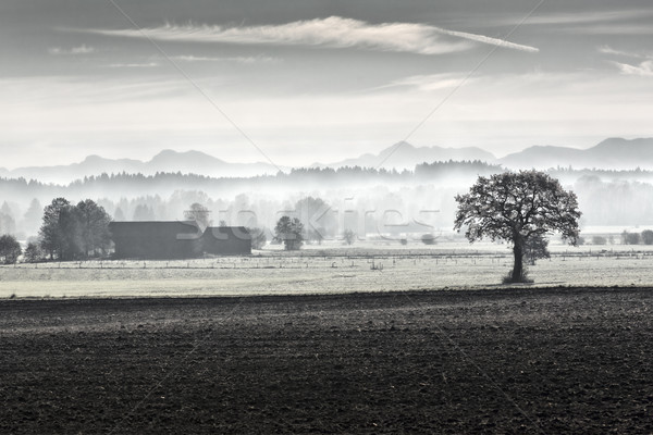 Morning fog in rural Bavaria, Germany Stock photo © haraldmuc