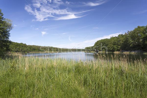 Bathing lake in East Germany Stock photo © haraldmuc