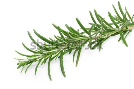 Rosemary (Rosmarinus officinalis) Stock photo © haraldmuc