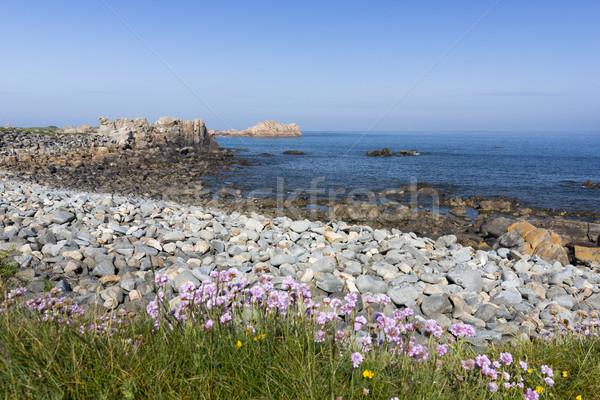 North coast of Guernsey island, UK, Europe Stock photo © haraldmuc