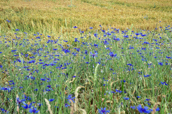 Stockfoto: Duitsland · voorjaar · voedsel · gras · natuur · zomer