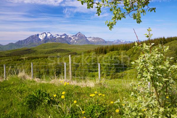 Skandinávia nyár festői panoráma zöld szigetek Stock fotó © Harlekino