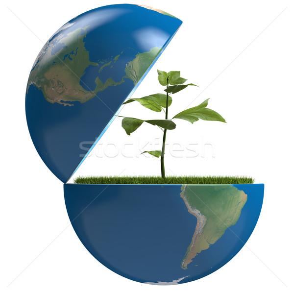 Plant inside planet Stock photo © Harlekino