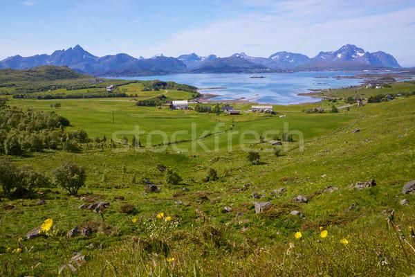Noorwegen pittoreske landschap eilanden zonnige zomer Stockfoto © Harlekino