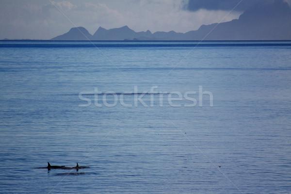 Gyilkos család úszik nyitva óceán part Stock fotó © Harlekino