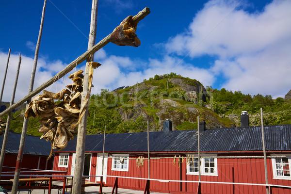 Vissen hut traditioneel eilanden Noorwegen vis Stockfoto © Harlekino
