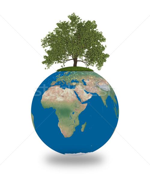 Eik aarde groeiend geïsoleerd witte milieu Stockfoto © Harlekino