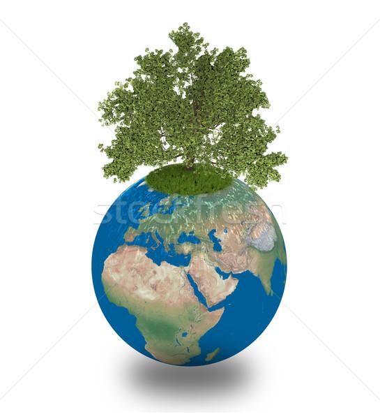 Carvalho planeta terra crescente isolado branco ambiente Foto stock © Harlekino