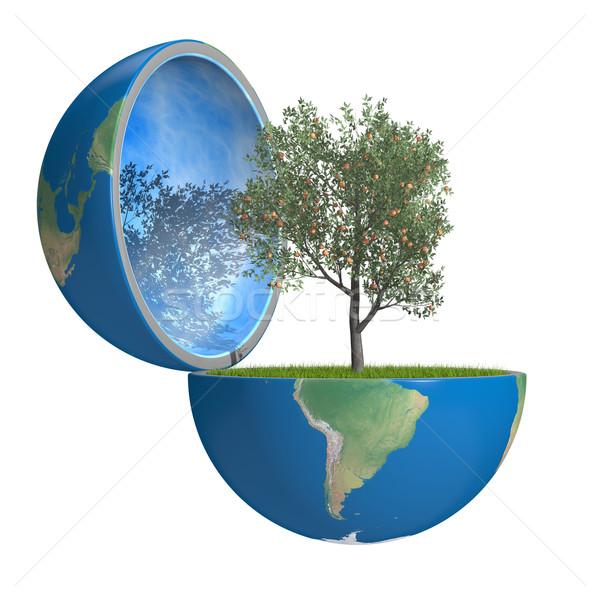 Stock fotó: Gyümölcsfa · bent · bolygó · növekvő · kinyitott · Föld
