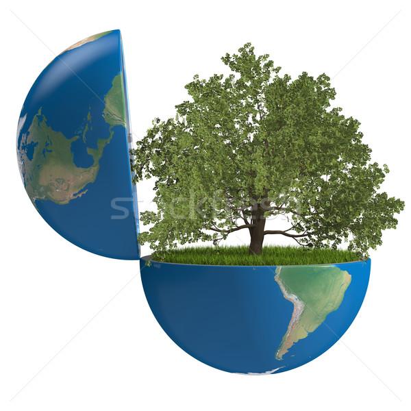 ストックフォト: 樫の木 · 惑星 · 成長 · 地球