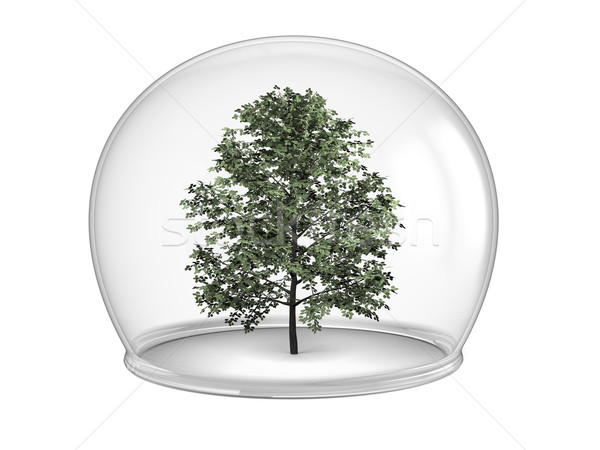 деревья дерево внутри стекла чаши окружающий Сток-фото © Harlekino