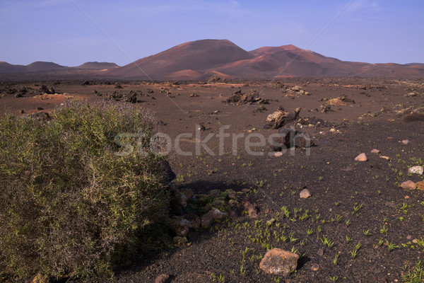 Vulcânico parque canárias paisagem ilha escuro Foto stock © Harlekino