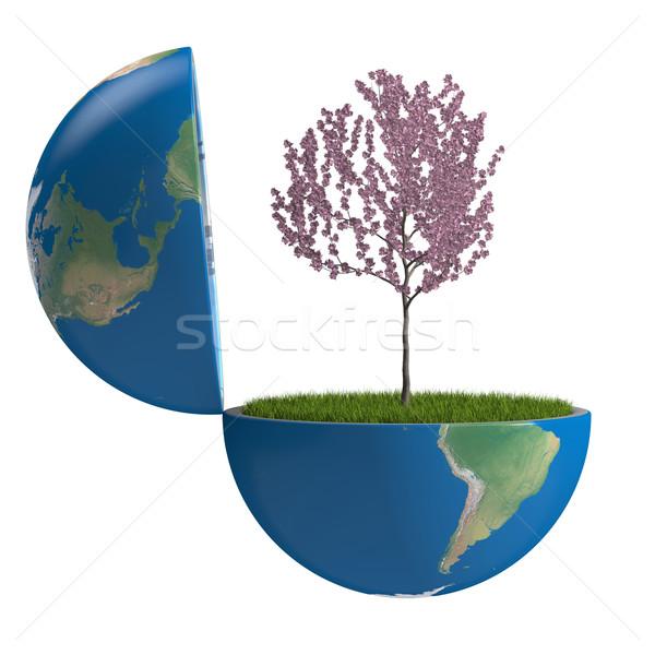 Tree inside planet Stock photo © Harlekino