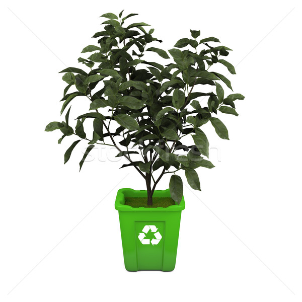Tea plant in recycle bin Stock photo © Harlekino