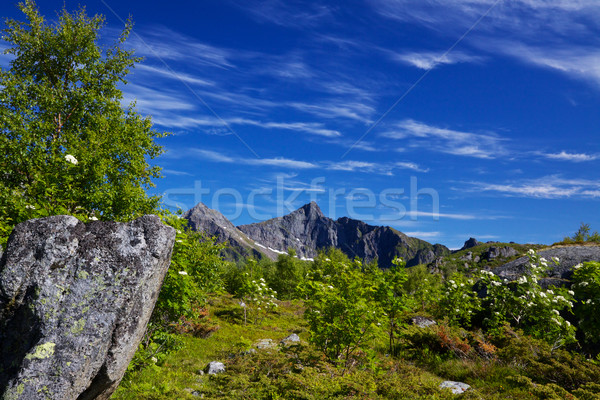 Mountainous panorama Stock photo © Harlekino