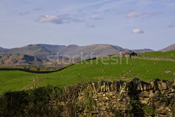 Paisaje norte Inglaterra ovejas montanas Foto stock © Harlekino