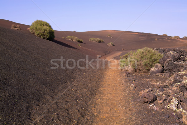 Path across volcanic park Stock photo © Harlekino