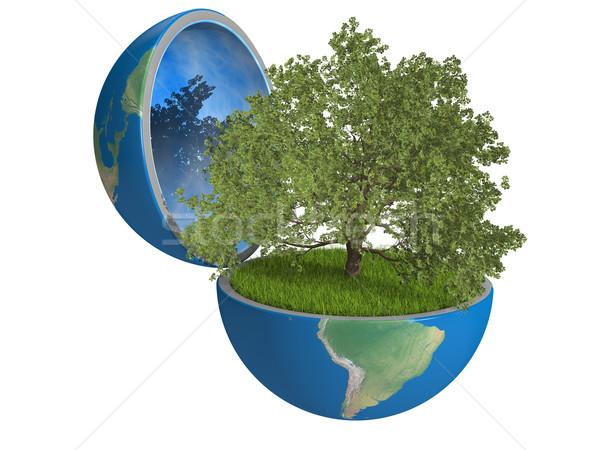 Chêne à l'intérieur planète croissant planète terre Photo stock © Harlekino