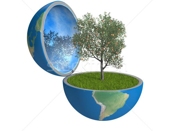 Gyümölcsfa bent bolygó növekvő kinyitott Föld Stock fotó © Harlekino