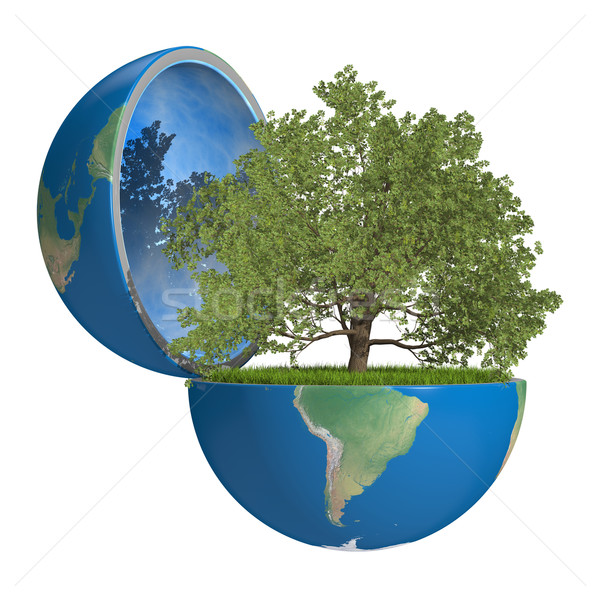 Oak tree inside planet Stock photo © Harlekino