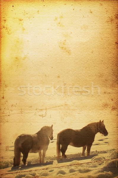 Paard mooie oude nostalgisch gebruikt kijken Stockfoto © Hasenonkel