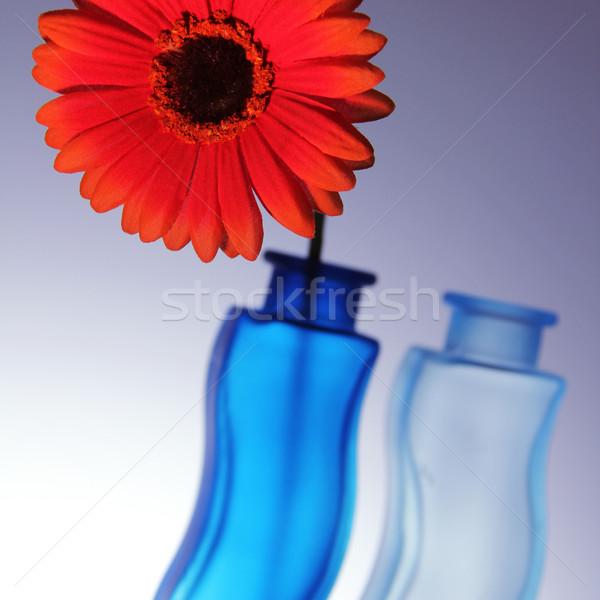 Kwiat jasne czerwony dwa niebieski serca Zdjęcia stock © Hasenonkel