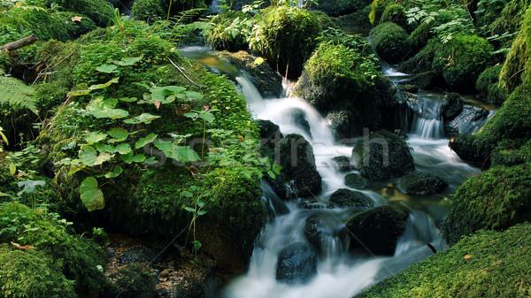 川 美しい 緑 ストックフォト © Hasenonkel