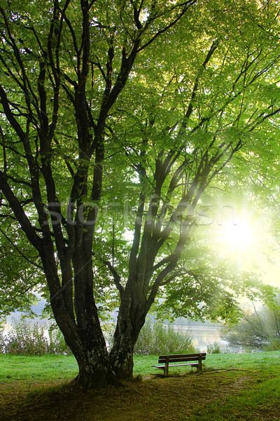 Cosecha banco solitario árbol follaje hierba Foto stock © Hasenonkel