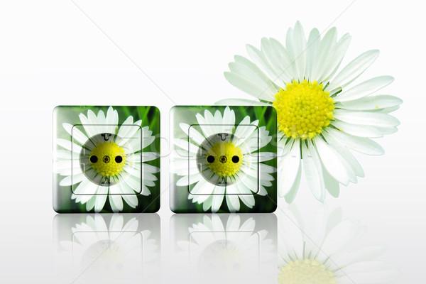 Wolna energii biały gniazdo zielone kwiat Zdjęcia stock © Hasenonkel
