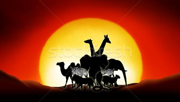 Sahara çöl hayvanlar gün batımı manzara yaz Stok fotoğraf © Hasenonkel