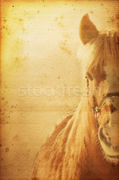 Stock photo: Horse Background