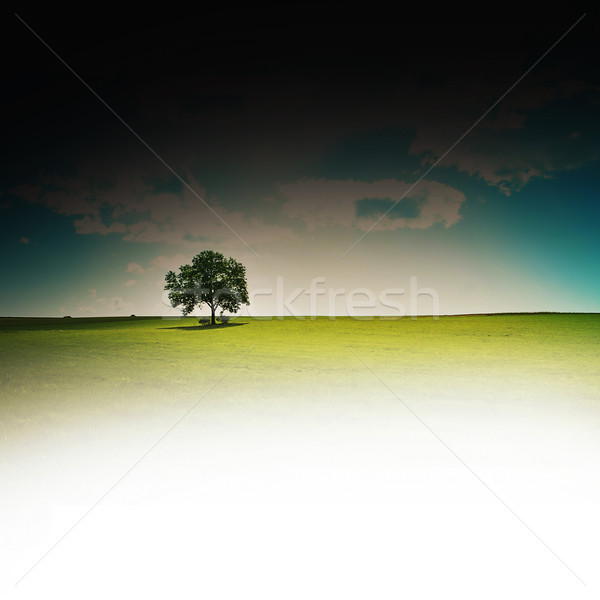 lone tree Stock photo © Hasenonkel