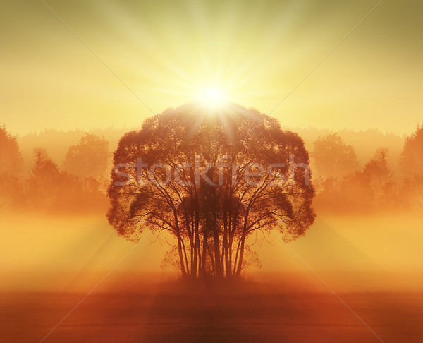 Fa késő nyár mező fű narancs Stock fotó © Hasenonkel