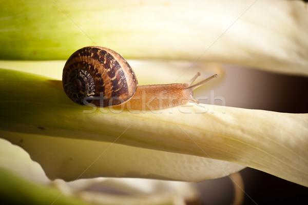Kúszás közelkép kert csiga növény természet Stock fotó © hayaship