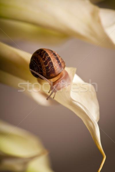 garden snail Stock photo © hayaship