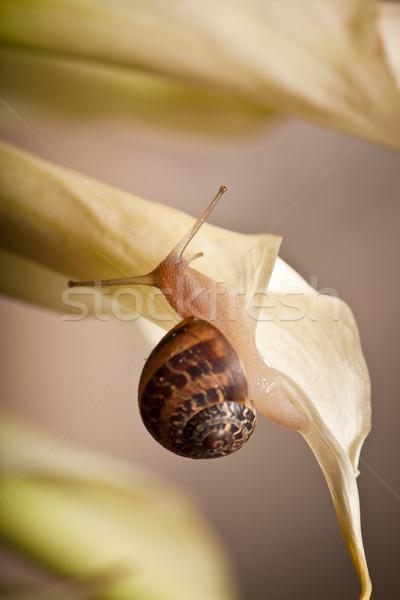 garden snail on flower Stock photo © hayaship
