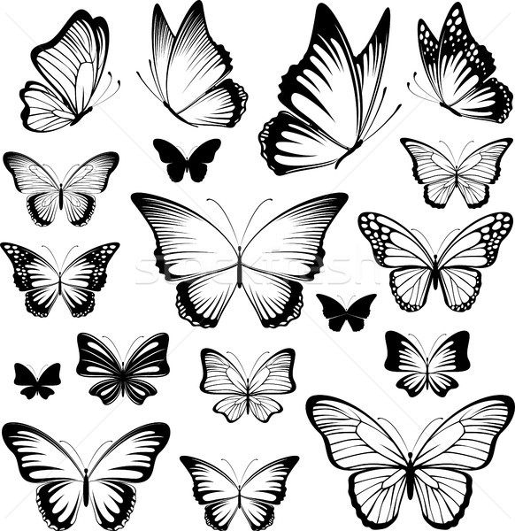 butterfly vector silhouettes Stock photo © hayaship