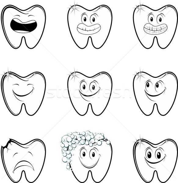 molar collection vector Stock photo © hayaship