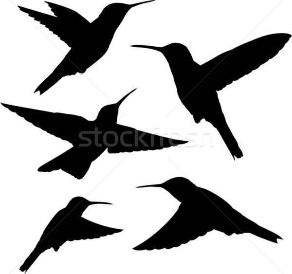 hummingbird silhouettes vector Stock photo © hayaship