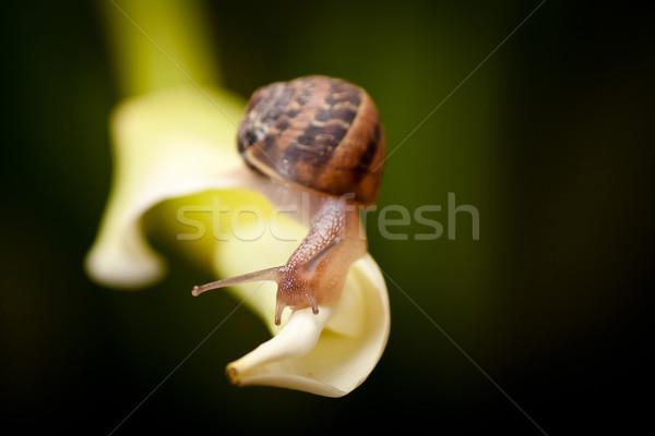 Kert csiga kúszás közelkép növény természet Stock fotó © hayaship